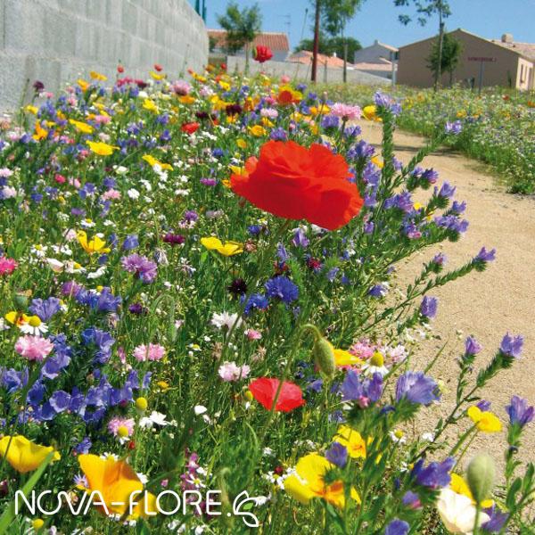 Prairie fleurie AMENAGEMENT - NOV ARIDE - CP