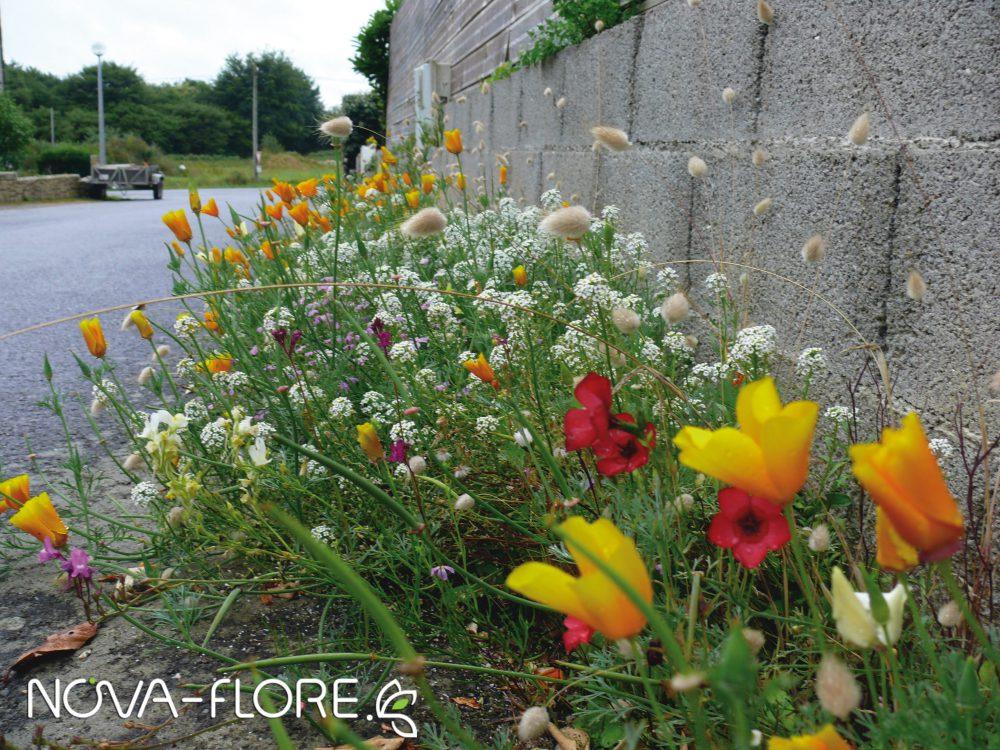 Prairie fleurie AMENAGEMENT - PIED DE MUR - CP