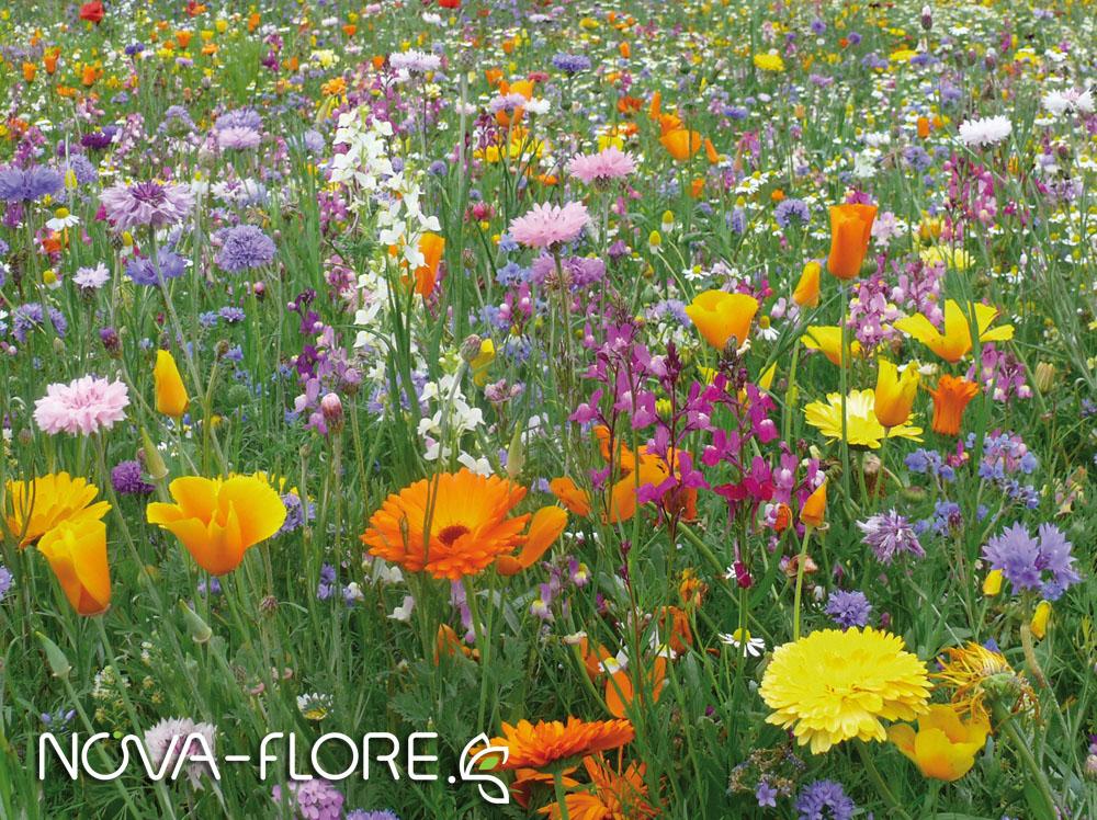 Prairie fleurie AMENAGEMENT - TP DURABLE - CP