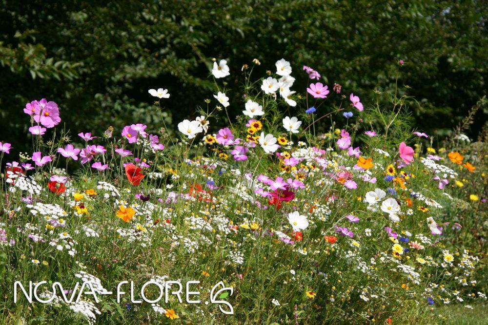 Prairie fleurie FLEURISSEMENT - FIESTA - CP