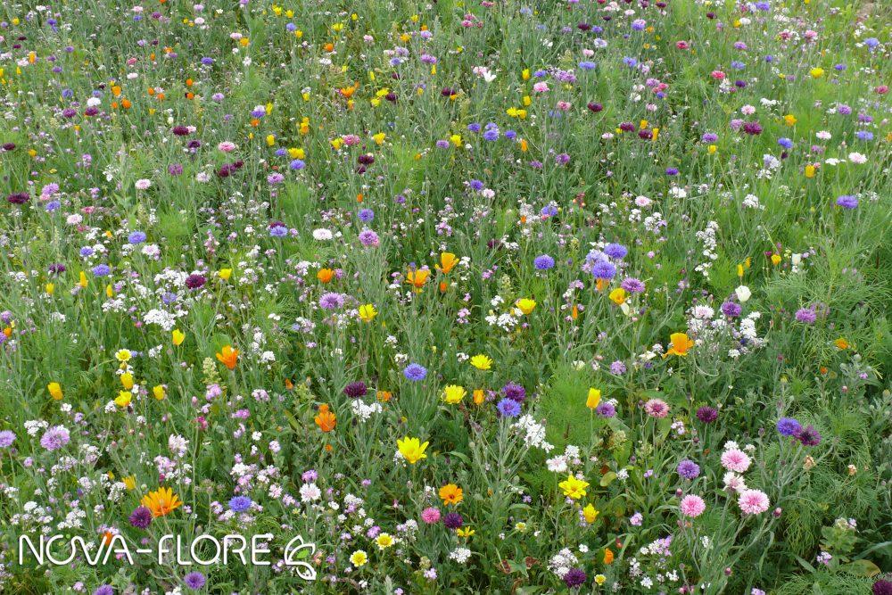 Prairie fleurie FLEURISSEMENT - TP CLASSIQUE - CP