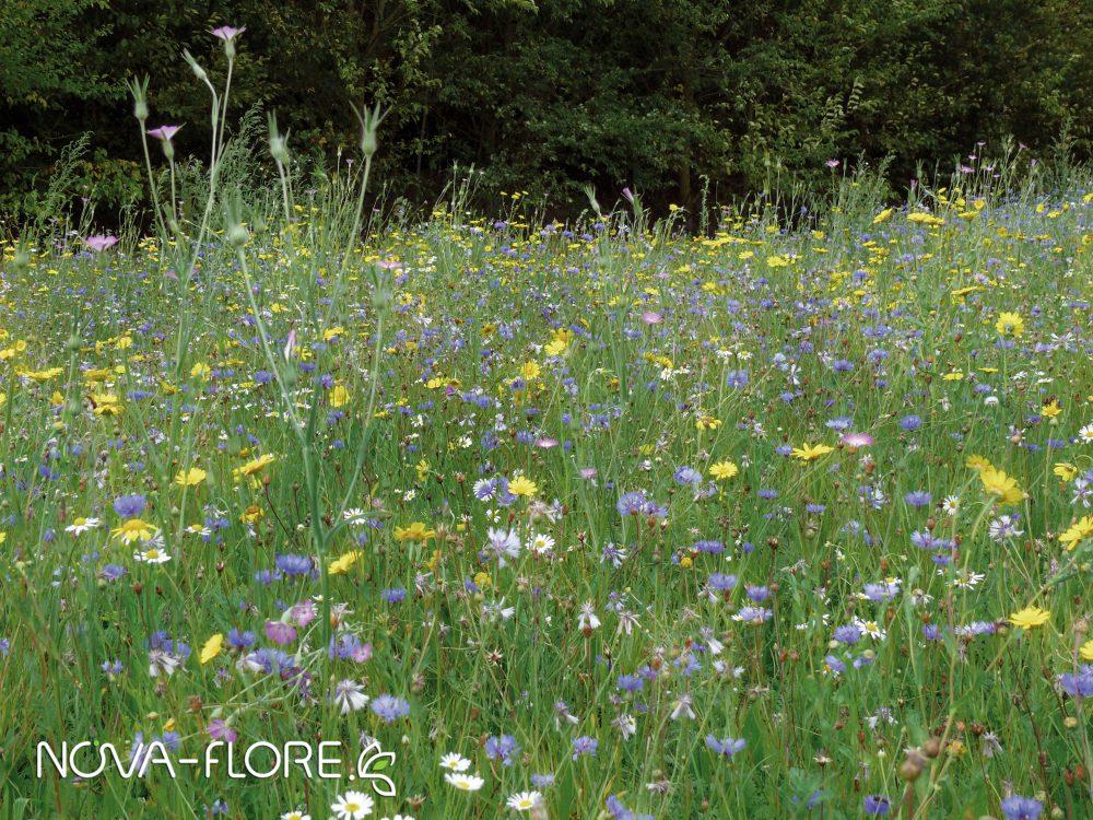 Prairie fleurie NATURA - NATURA AUXILIAIRES DE CULTURE - CP