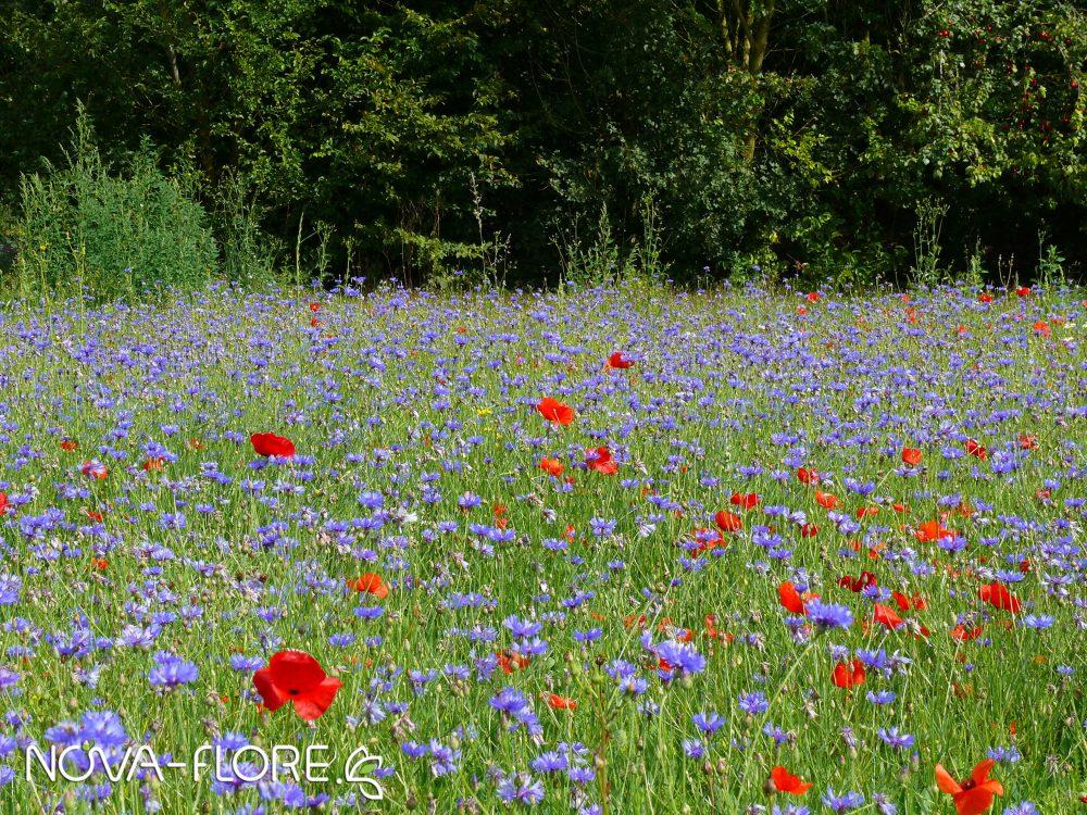 Prairie fleurie NATURA - NATURA MELLIFERE - CP