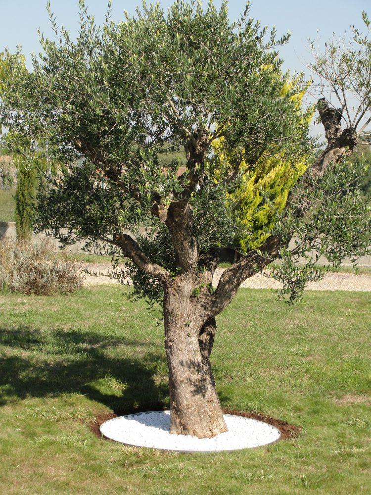 Entourage d'arbre rond acier galva 1.5mm avec paillage blanc