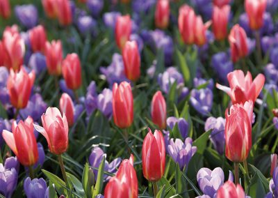 Mélange naturel -Type colours of nature - 46712